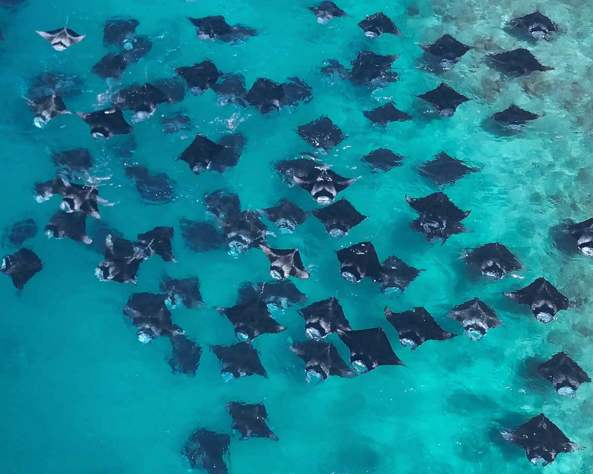 Hanifaru-Bay-Manta-Point-Baa-Atoll