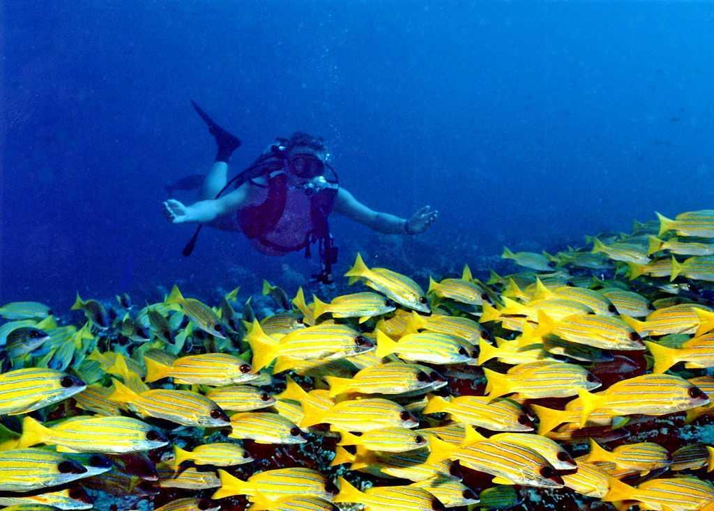 Banana Reef Malè Nord