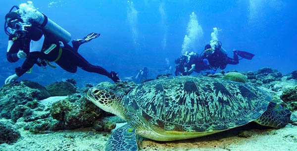 Diving Maldive Aprile