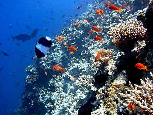 Kandholhudhoo House Reef