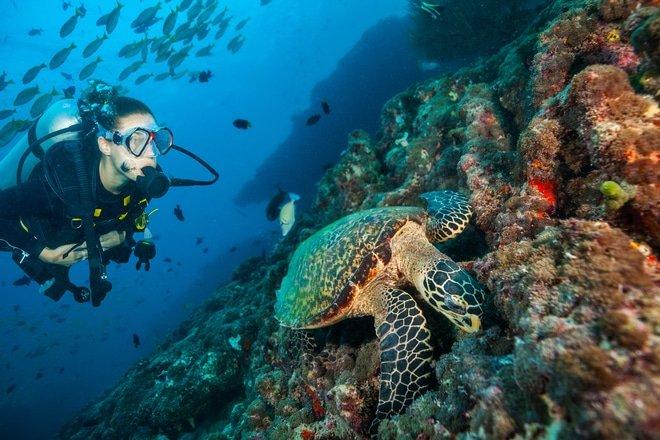 Maldive Diving a Ottobre