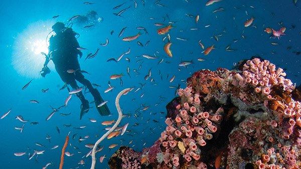 diving novembre Maldive