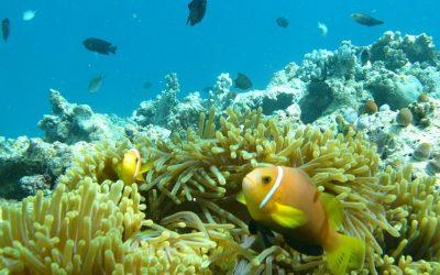 S.O.S. coralli: Maldive chiama Italia